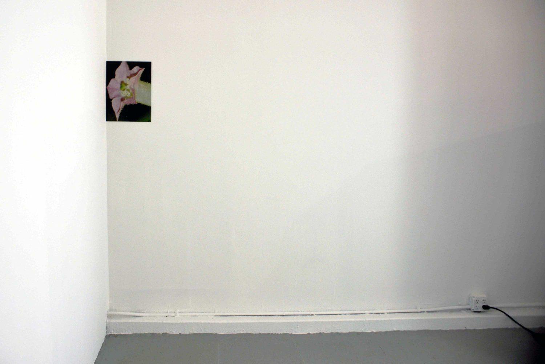 Isabel Mallet - \  \,'`._,'`./  /